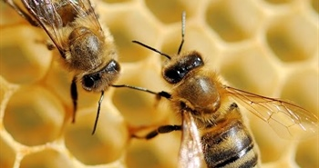 50,000 beehives reducing poverty in Zambia: Wood-Mizer...